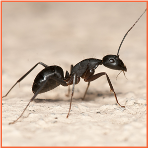 Ant Standing
